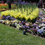 Carnival of Flowers, Toowoomba, QLD